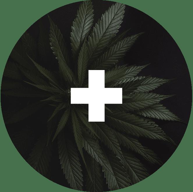 Medical Marijuana Use Guidelines